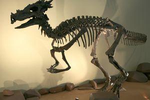 dracorex hogwartsia skeleton at eht children's museum of Indianapolis
