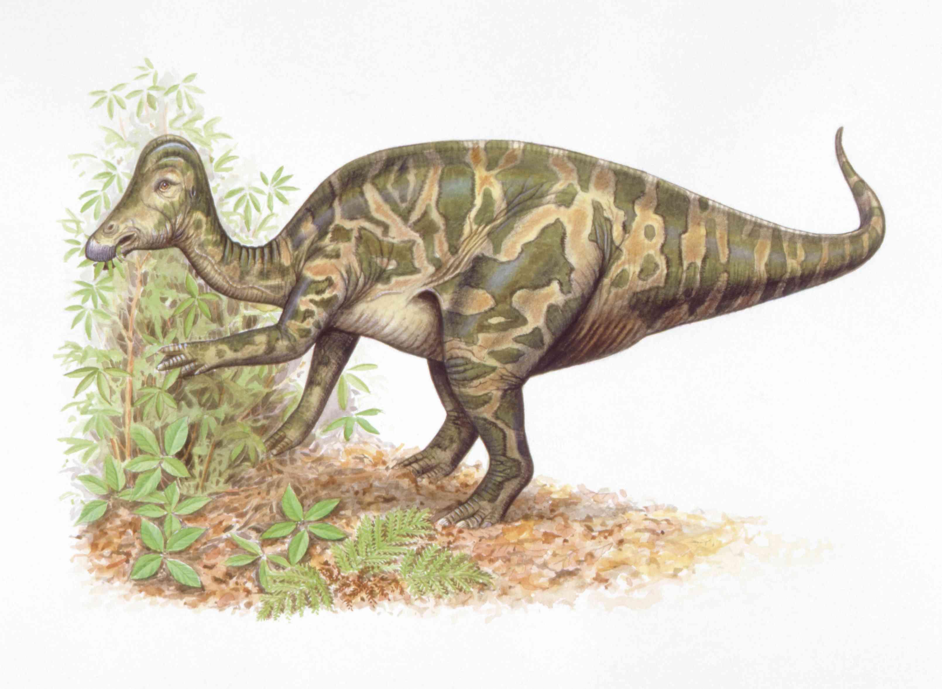 Illustration of Hypacrosaurus