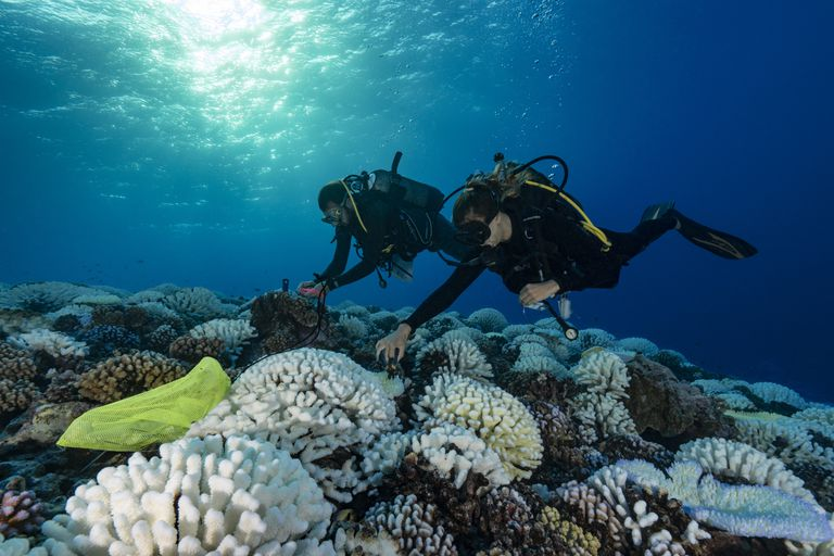"""Two divers approach coral reefs suffering """"white death"""""""