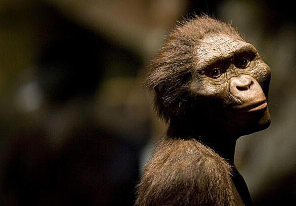 Sculptor's Rendering of the Hominid Australopithecus afarensis