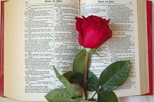 Red Rose on Shakespeare's open book