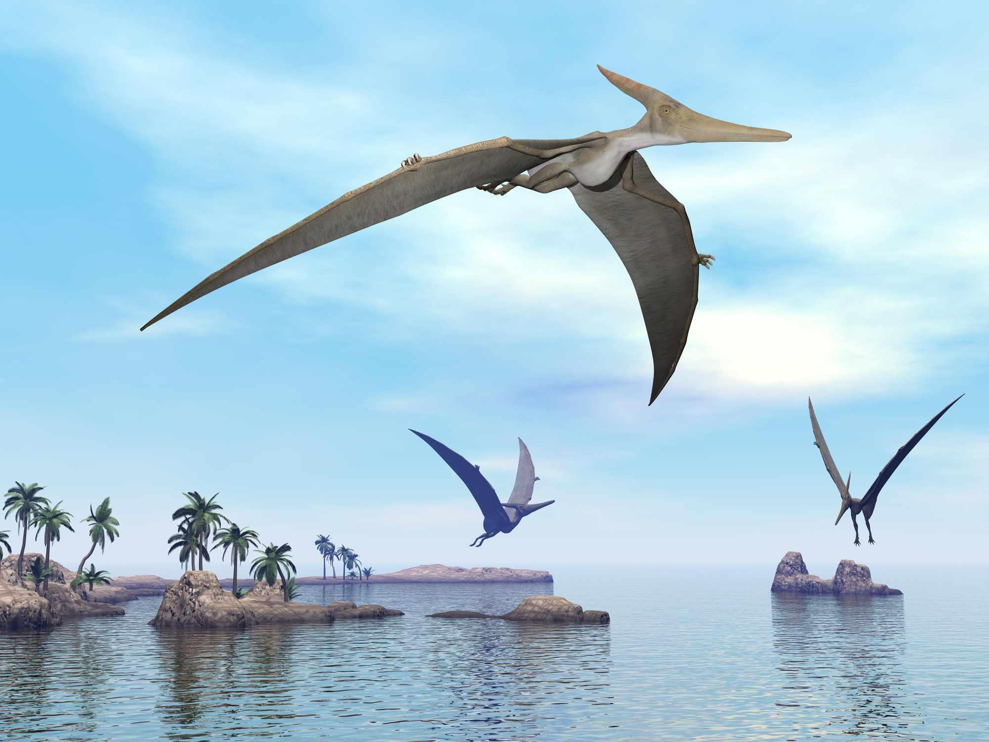 Dinosaurios Pteranodon volando - 3D render