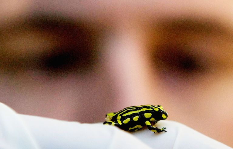 Small frog crawling in front of human face.