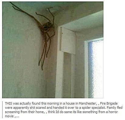 giant spider found in manchester urban legends