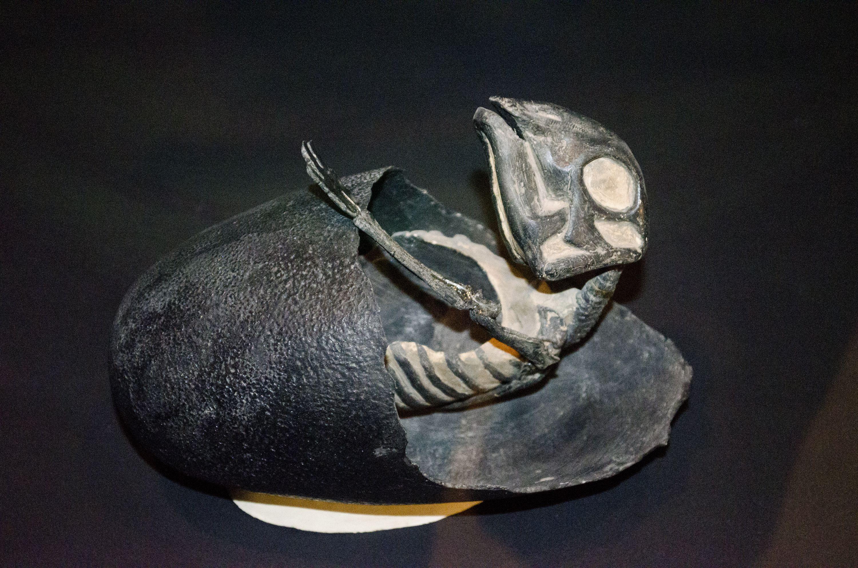 <i>Maiasaura</i> hatchling emerging from its egg