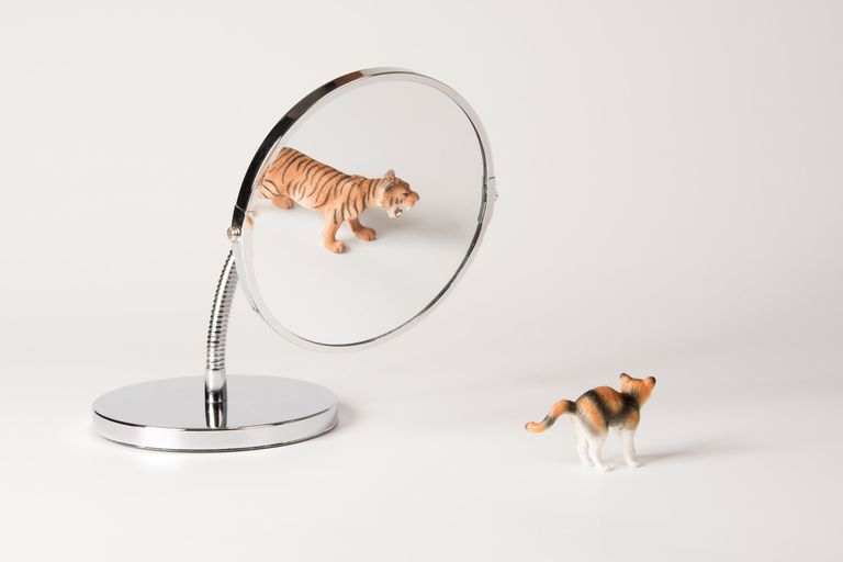 Illusionary Cat Family Reflection In Mirror