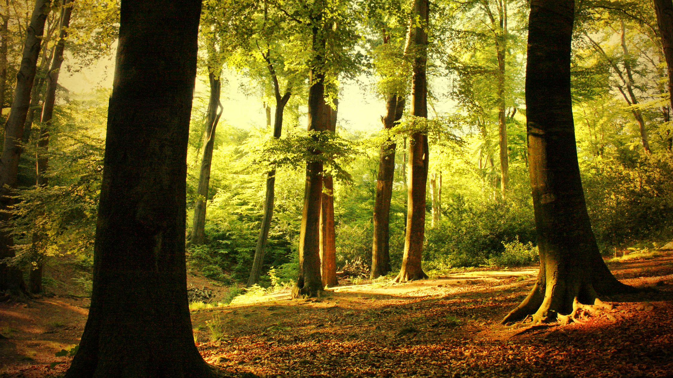 Eastern Deciduous Forests