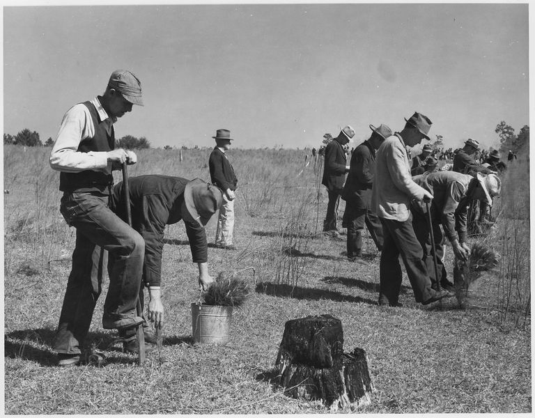 Members of the Civilian Conservation Corp (CCC) planting during the Great Depression.