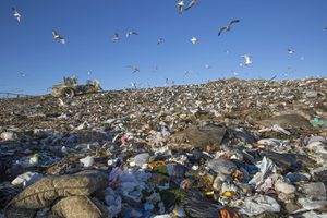 Seagulls Flying Over Garbage Dump