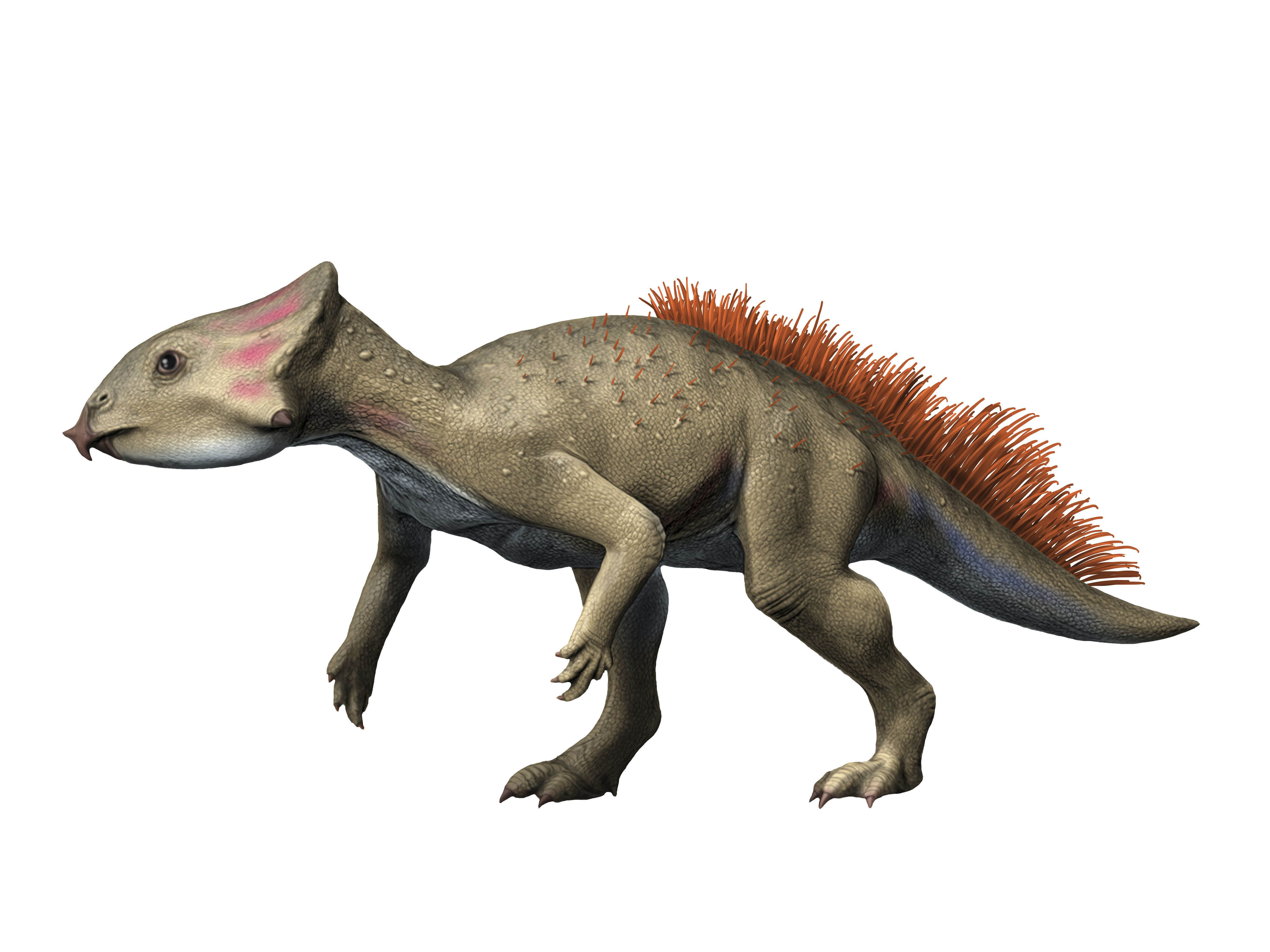 Aquilops is a ceratopsiam from the Early Cretaceous period of Montana.