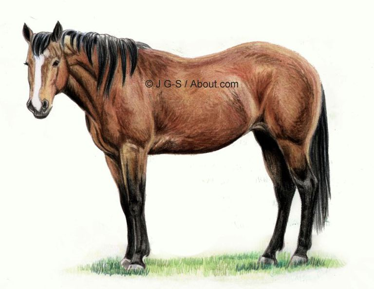 completed horse drawing from colored pencil tutorial