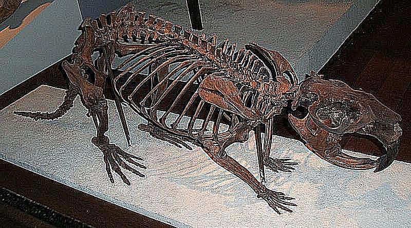 Castoroides Riesenbiber