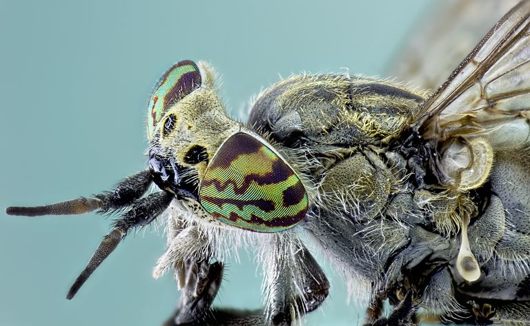A Pair Of Compound Eyes Getty Images