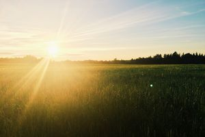 Sun Shining Over Wheat Field