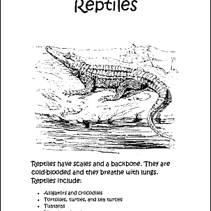Reptiles Coloring Book 10 Different Pages