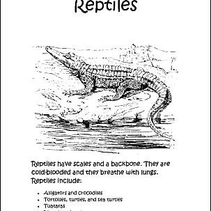 reptilecolor 58b977e03df78c353cdd2bea