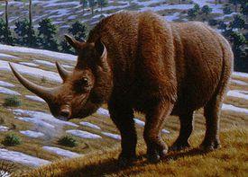 coelodonta woolly rhino