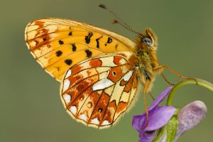 Colorful butterfly perched on a purple flower.