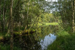 A small lake in the Ribnitzer great moorland, near the German Baltic sea.