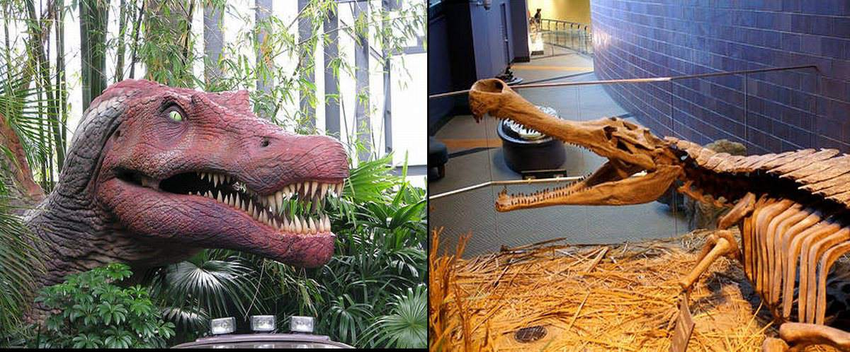Head of <i>Sarcosuchus</i> on the left and skeleton of <i>Spinosaurus</i> on the right