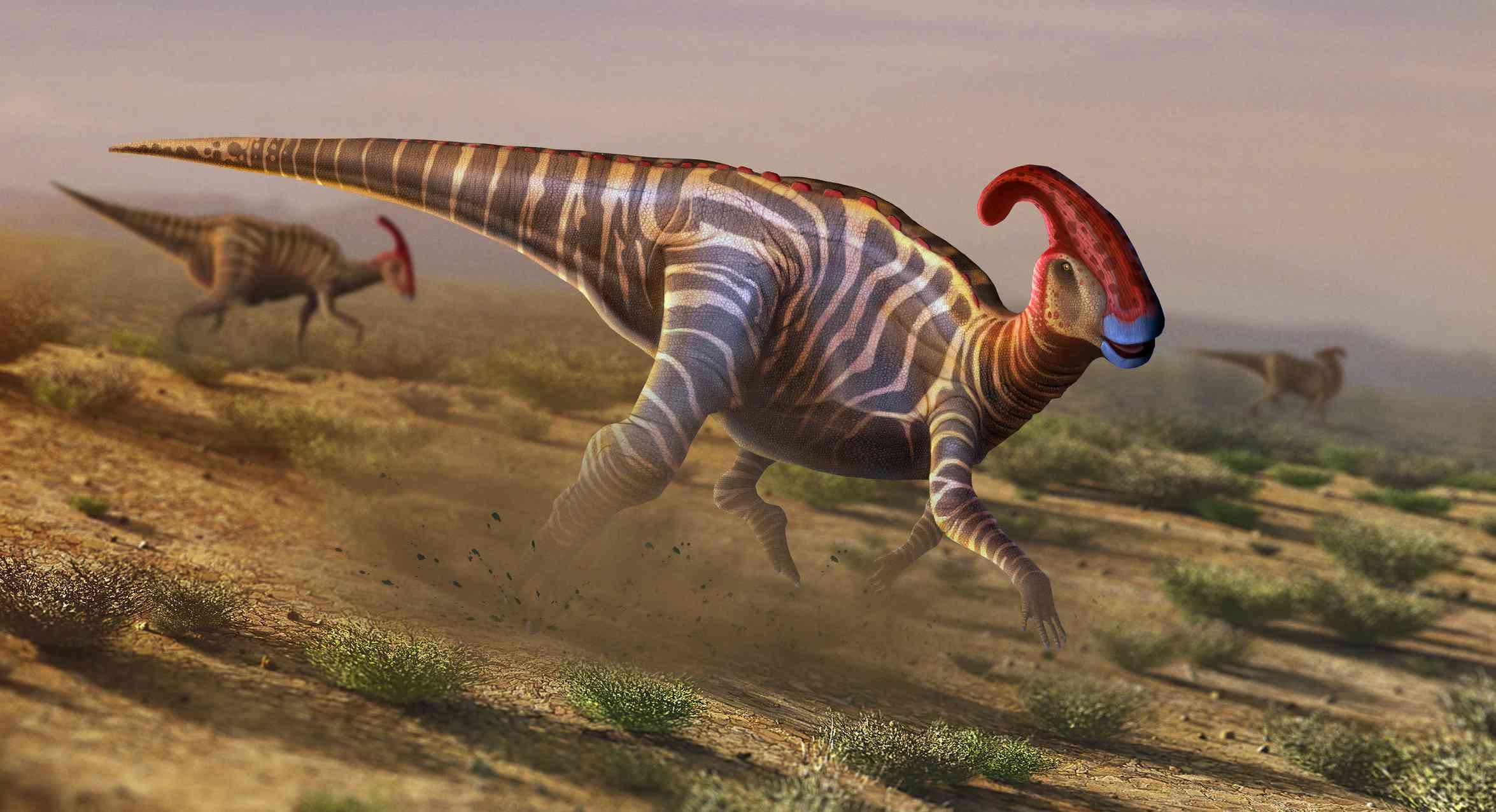 Artwork of parasaurolophus