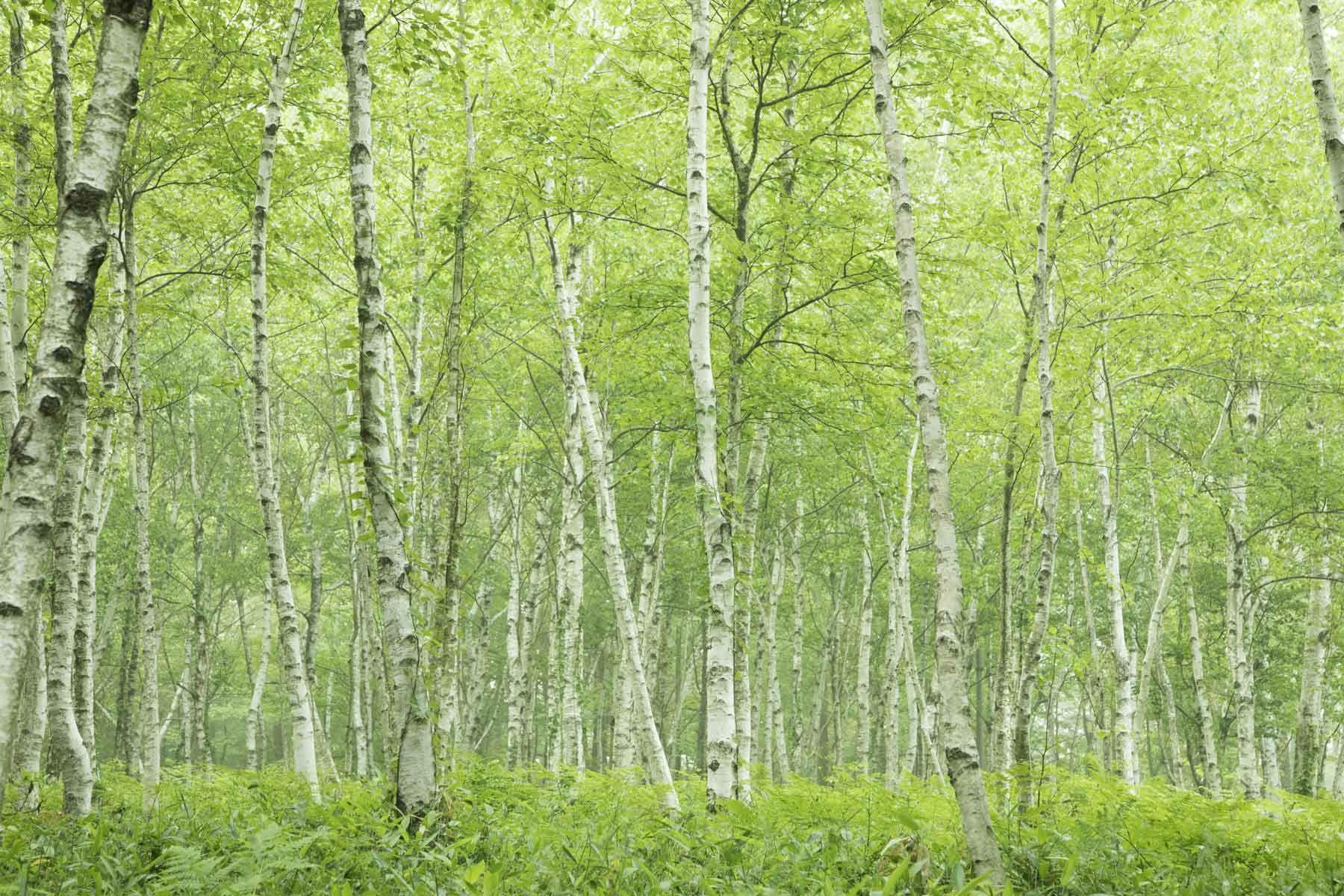 Distinguishing Between Hardwood And Softwood Trees