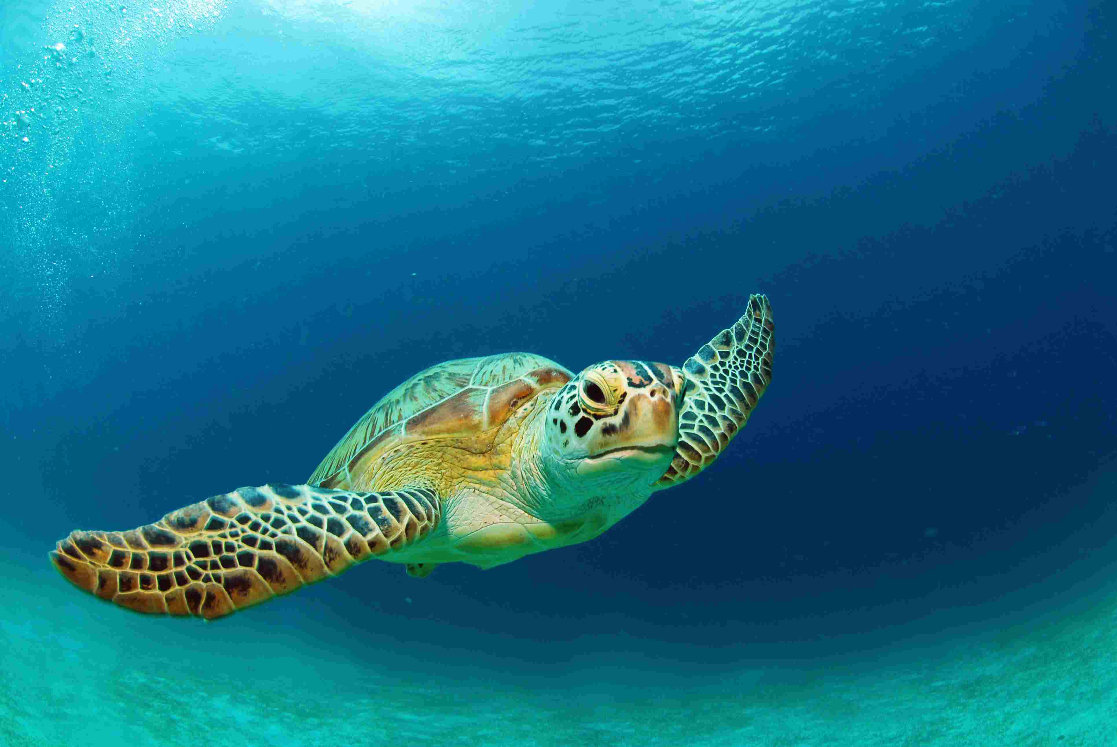 the 7 species of sea turtles