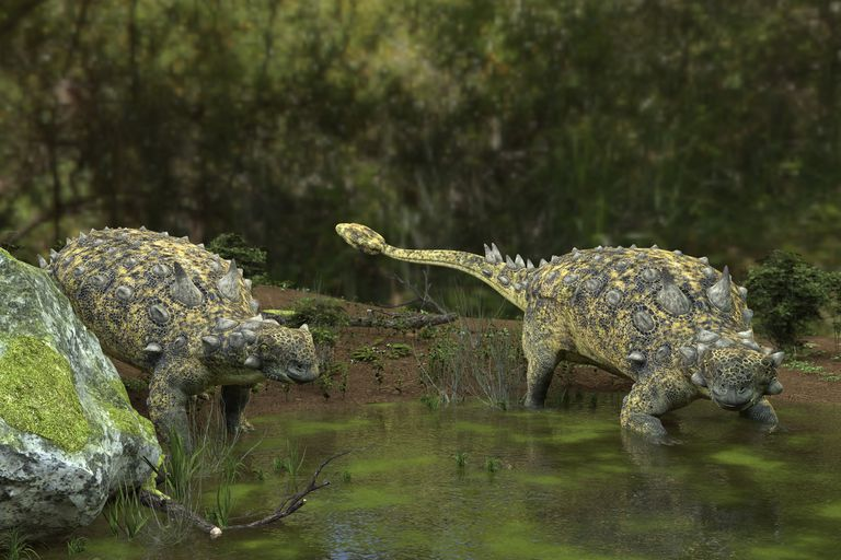 Euoplocephalus dinosaurs, illustration