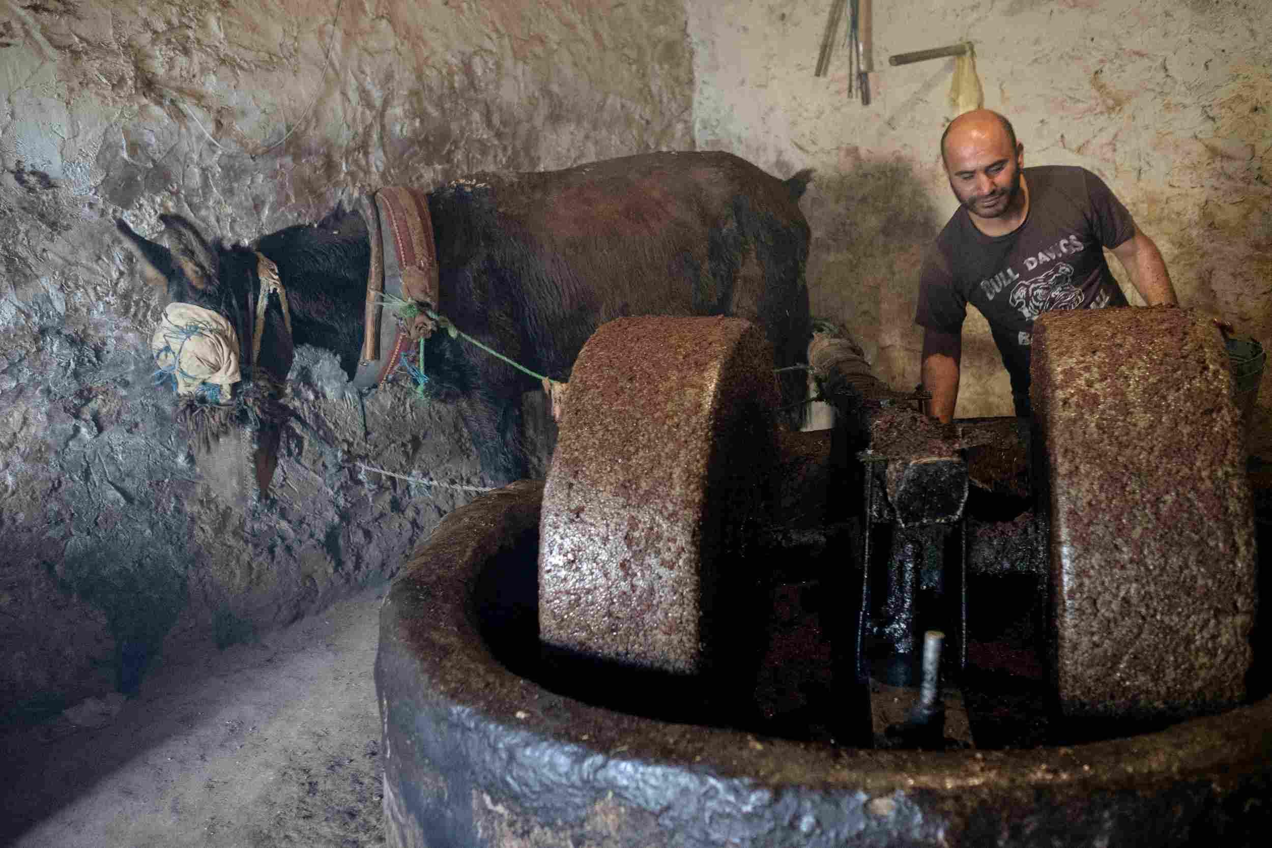 Olive Press in operation, Tunisia 2018