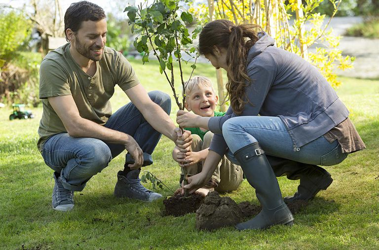 Parents and son (4-6) planting tree