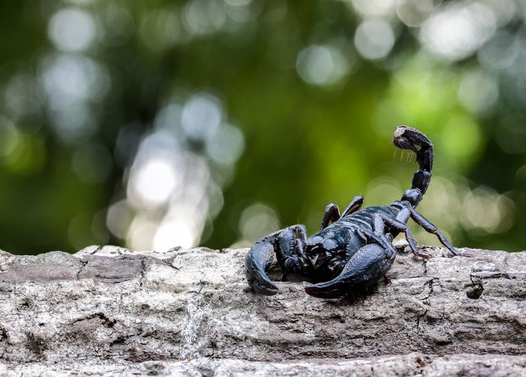 Closeup view of a scorpion in nature