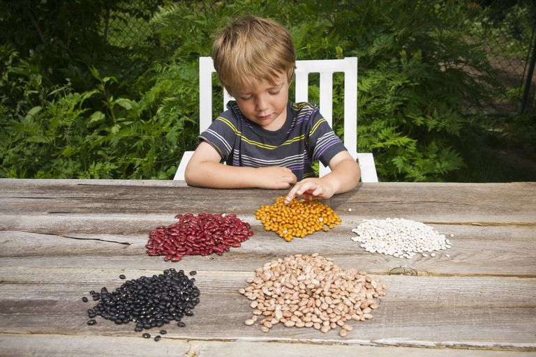 Little boy counting beans