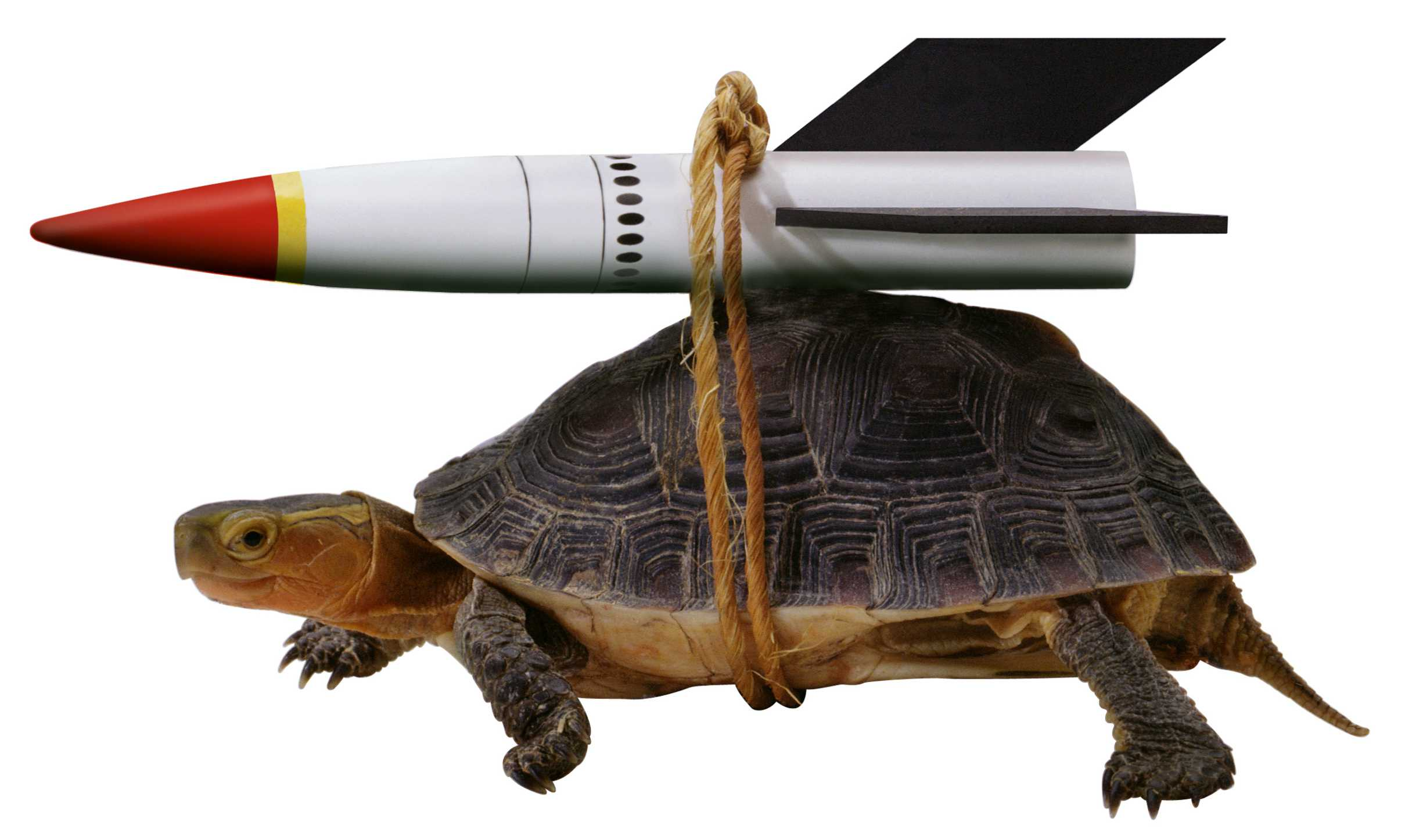 A turtle with a small rocket strapped to its back with rope on a white background.