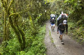 Porters Hiking on Inca Trail, Peru