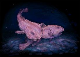 Blobfish at their appropriate sea depth.