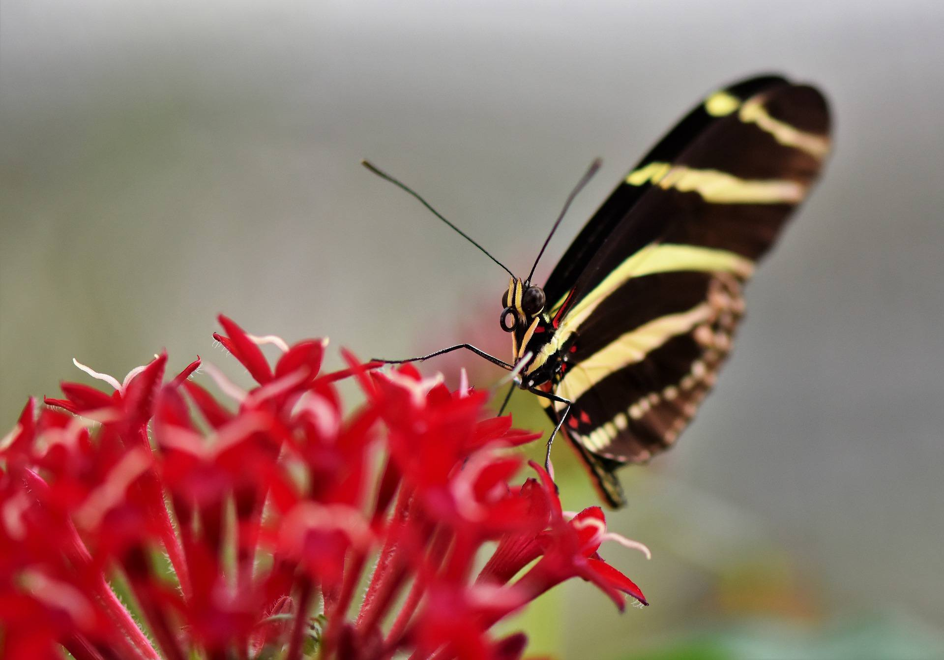 Close up of a butterfly sitting on a flower.