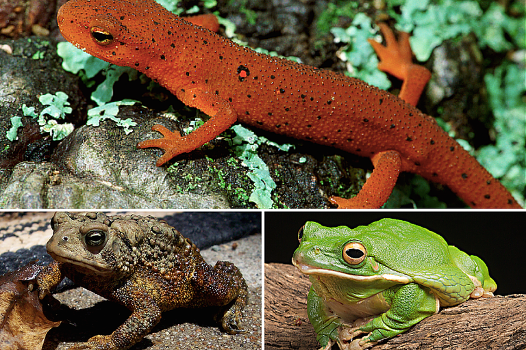 Photos of Amphibians
