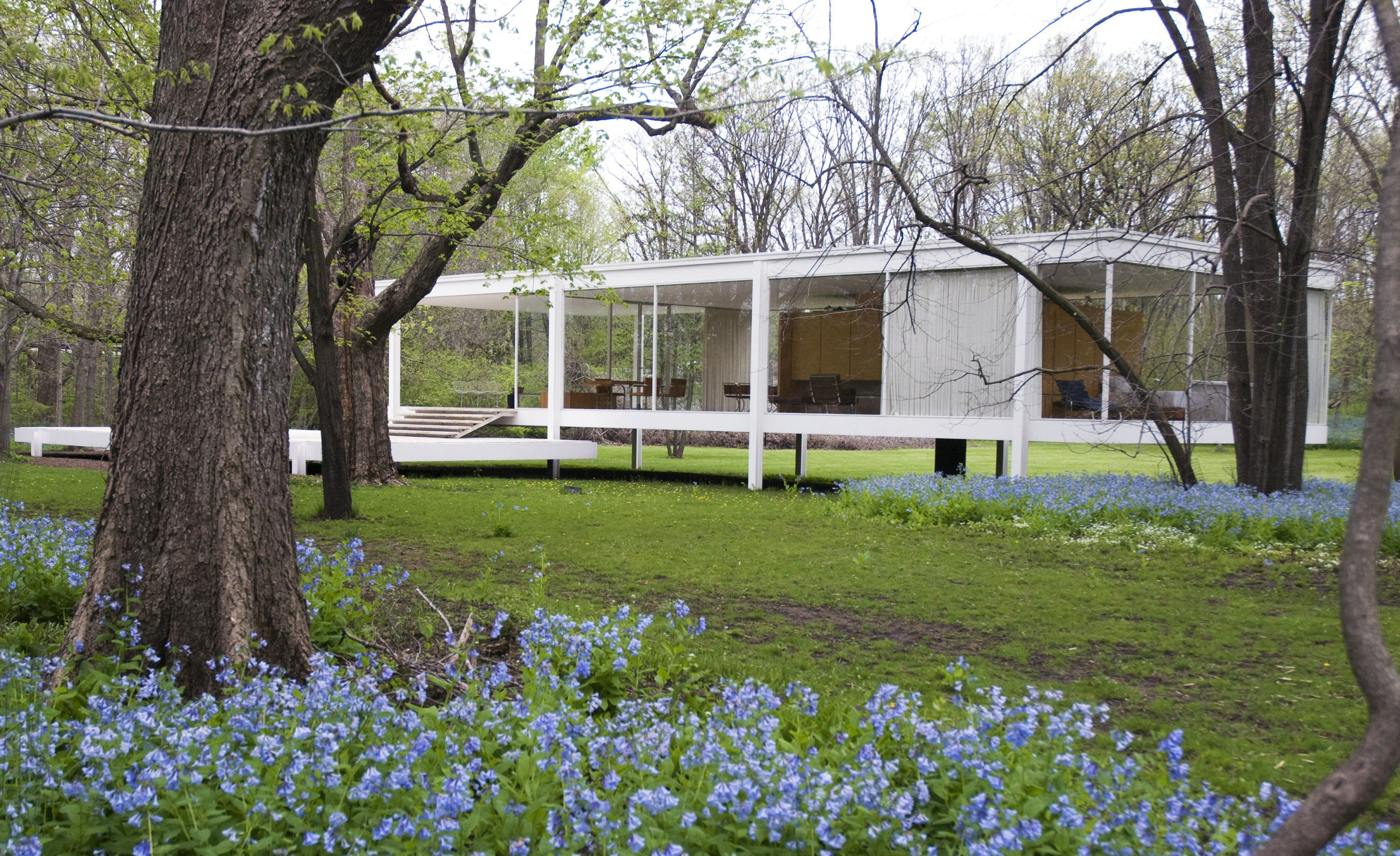 one story glass sided house raised from the ground on piers in rural setting amidst trees and blue flowers