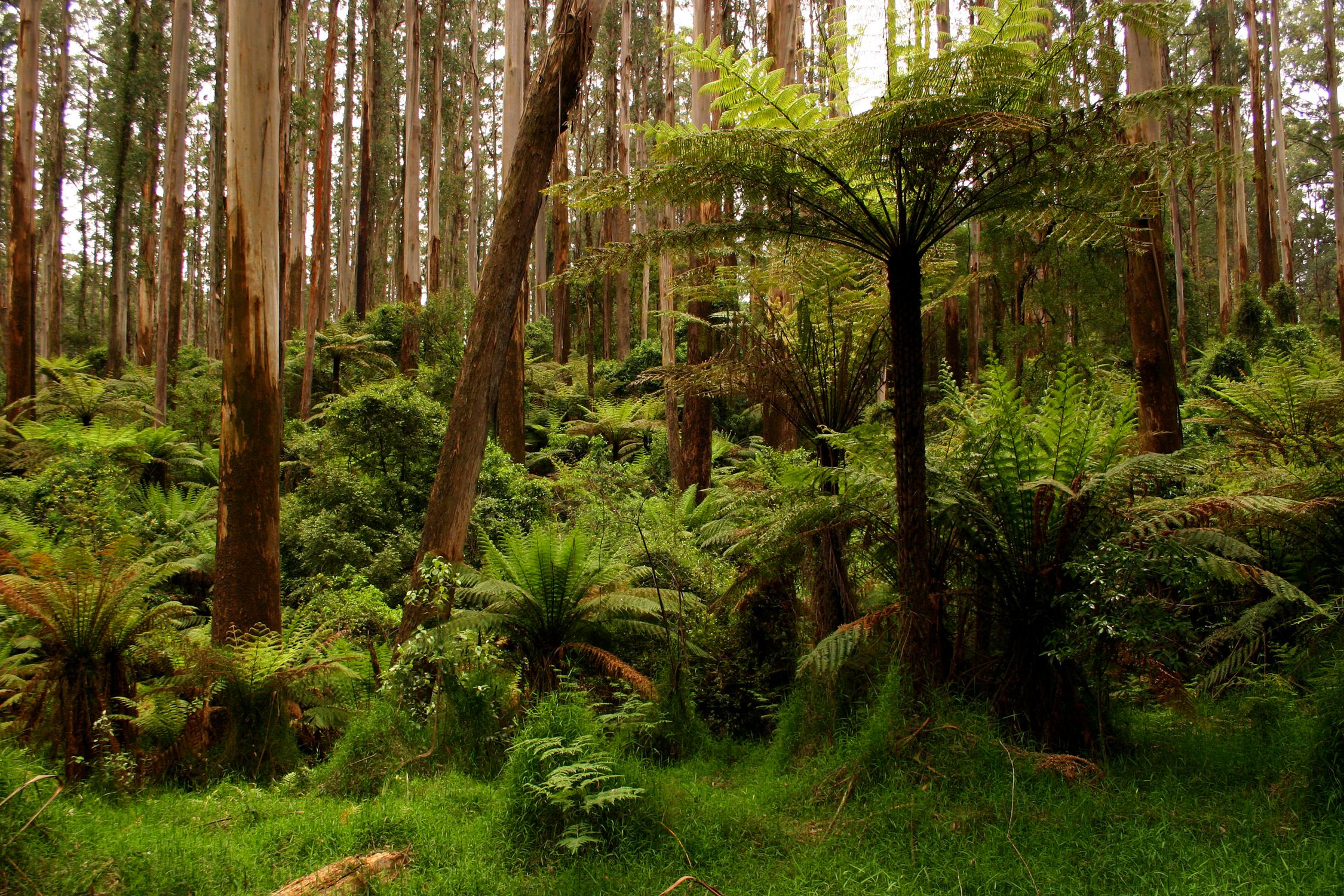 Forests are structured in vertical layers.