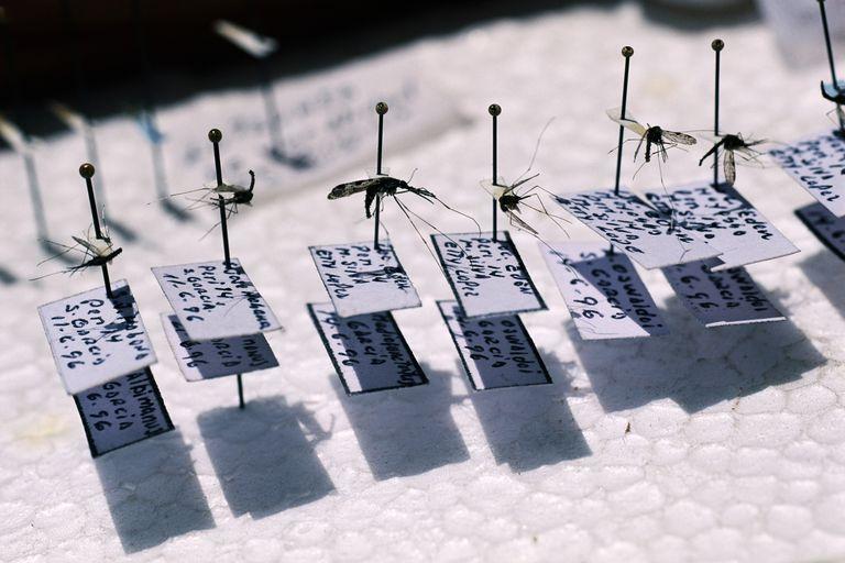 Mosquito identification for malaria eradication