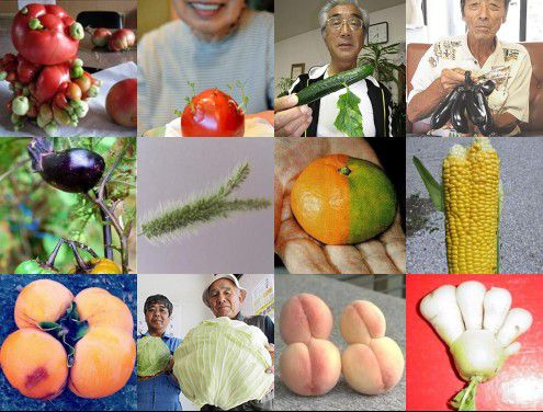 Fukushima mutant vegetables