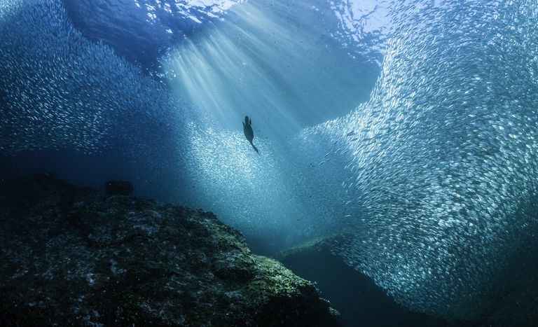 Diving Into Bait Fish