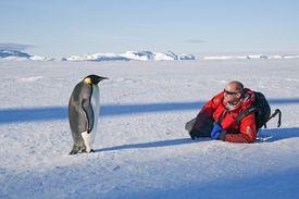Penguin and man in Antarctica