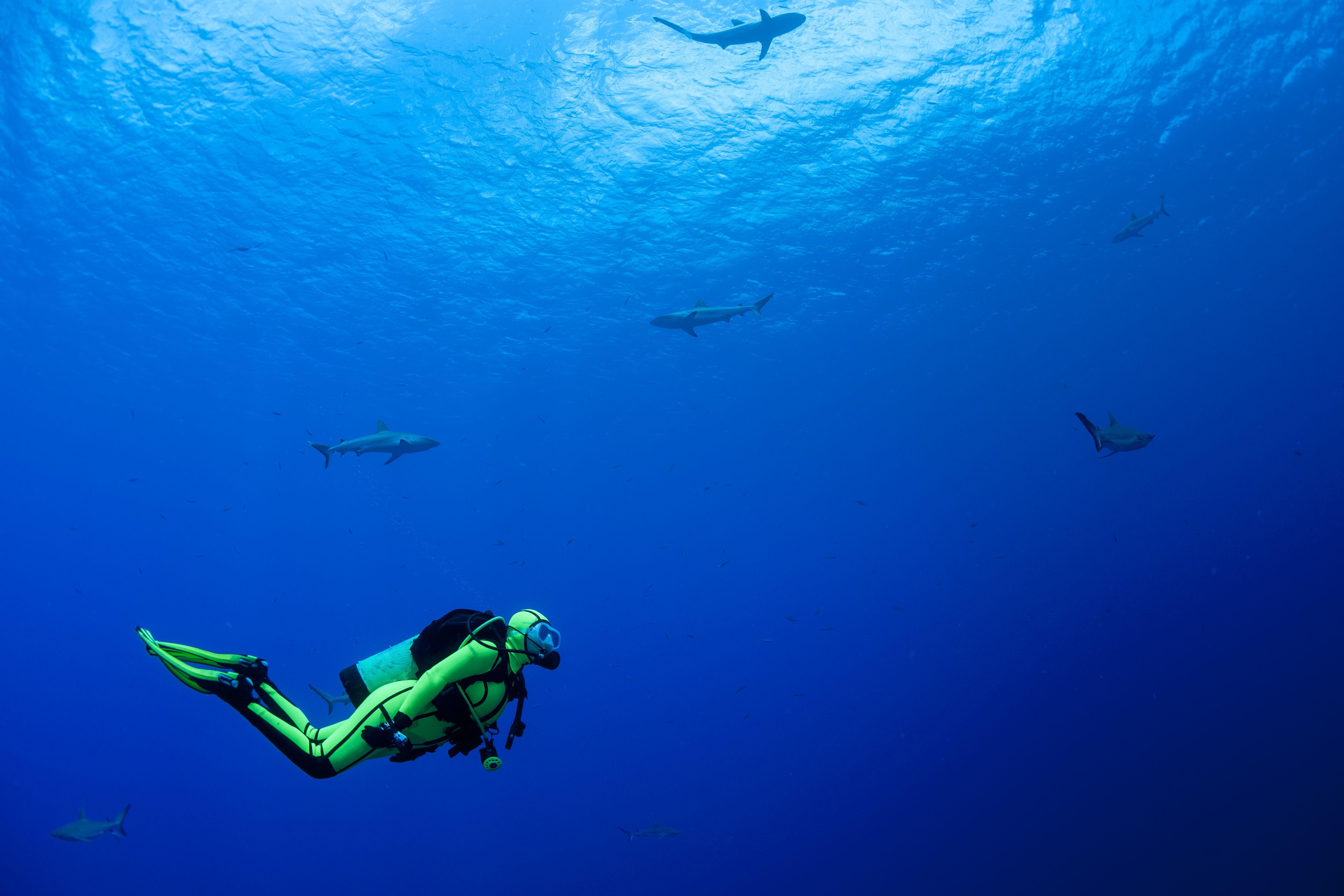 水肺潜水_20 Common Scuba Diving Hand Signals