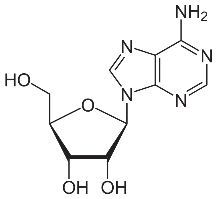 Glycosidic bond definition and examples ccuart Choice Image