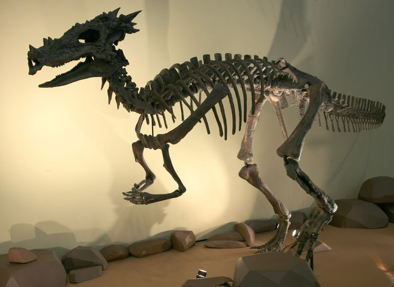 dracorex hogwartsia skeleton at eht children's museum of Indianapolis