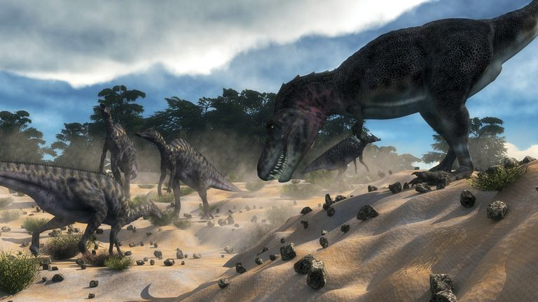 Tarbosaurus surprising a herd of Saurolophus dinosaurs outside of a cedar forest.