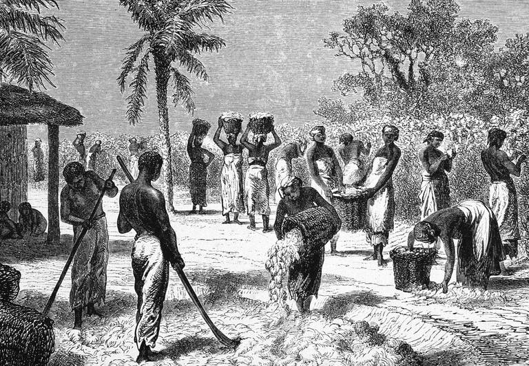 Illustration of slaves harvesting cotton on a southern plantation