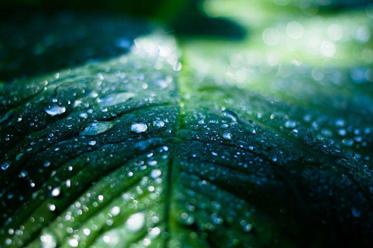 Condensation on a leaf