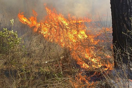 Running, Preheating Ground Wildfire